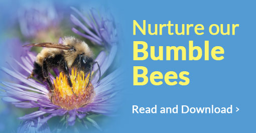 Nurture our bumble bees