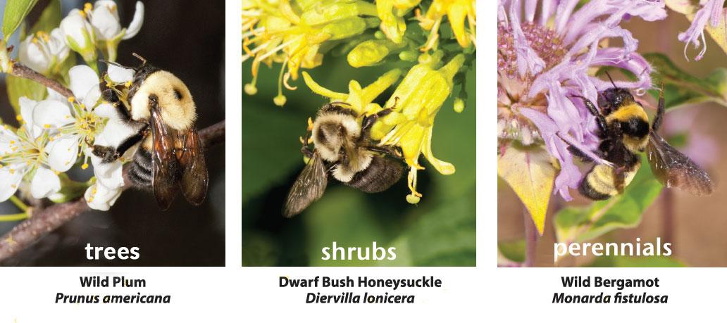 Diversity of Native Plants